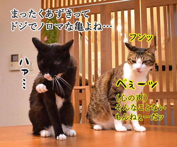 まったくあずきはドジでノロマな… 其の二 猫の写真で4コマ漫画 1コマ目ッ