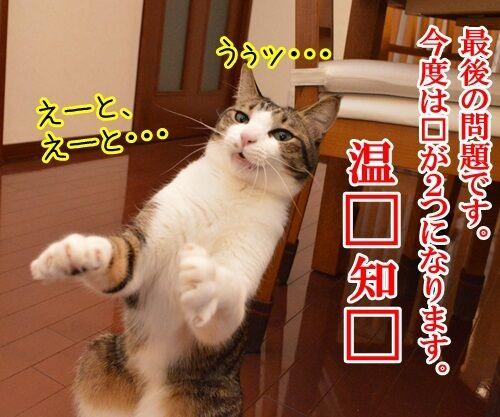 クイズ 四文字熟語ッ!! 猫の写真で4コマ漫画 2コマ目ッ