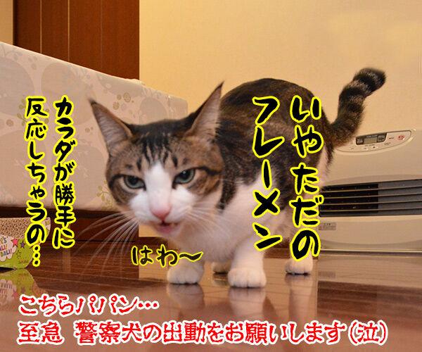 警察猫 あずき 猫の写真で4コマ漫画 4コマ目ッ