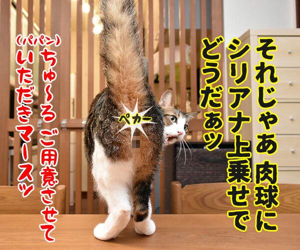 オヤツちょーだいッ 猫の写真で4コマ漫画 4コマ目ッ