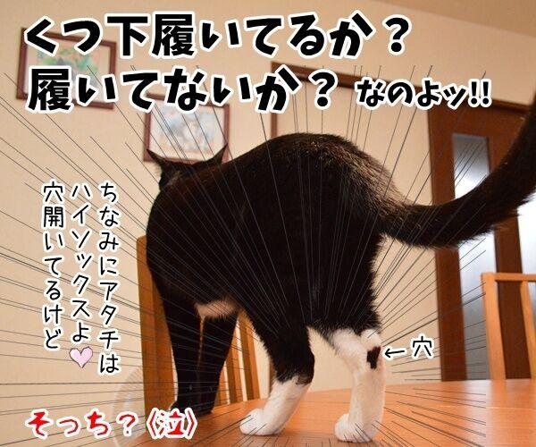石田純一氏、東京都知事選に出馬? 猫の写真で4コマ漫画 4コマ目ッ