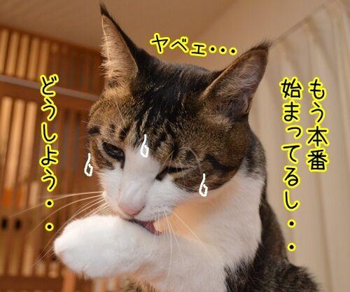 ドタキャン 猫の写真で4コマ漫画 2コマ目ッ
