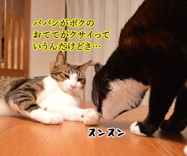 ボクのおててはクサクない 猫の写真で4コマ漫画 2コマ目ッ