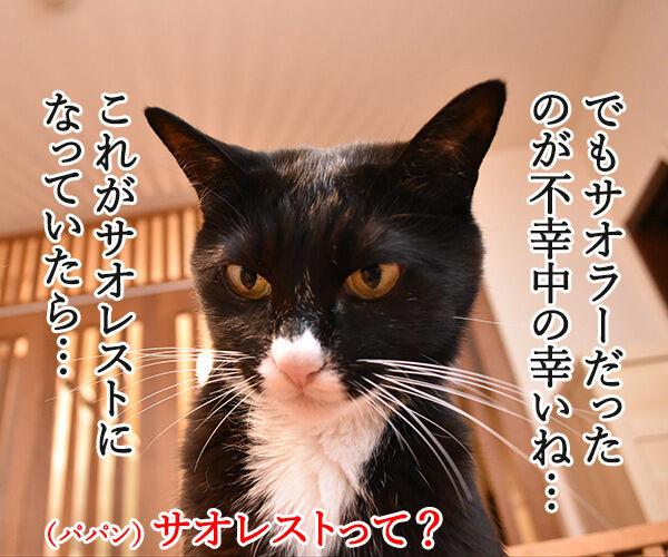 台風22号も強かったわね… 猫の写真で4コマ漫画 3コマ目ッ