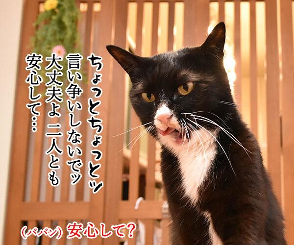 劇場版『名探偵コナン』は全米が泣くね… 猫の写真で4コマ漫画 3コマ目ッ