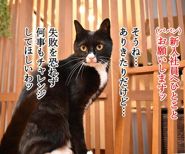 新入社員のみんなへひとことお願いしますッ 猫の写真で4コマ漫画 2コマ目ッ