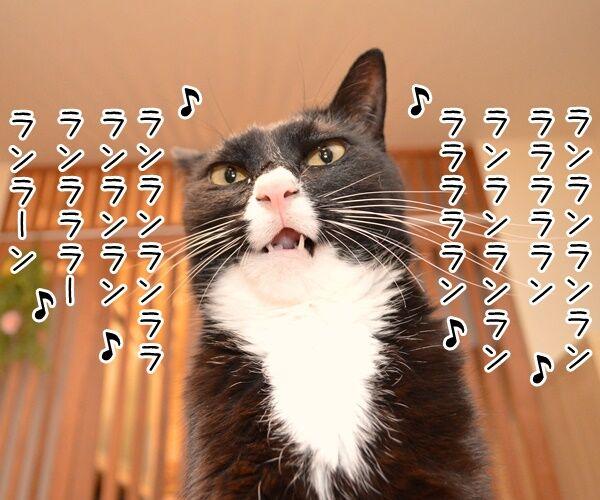 ナウシカ・レクイエム 猫の写真で4コマ漫画 3コマ目ッ