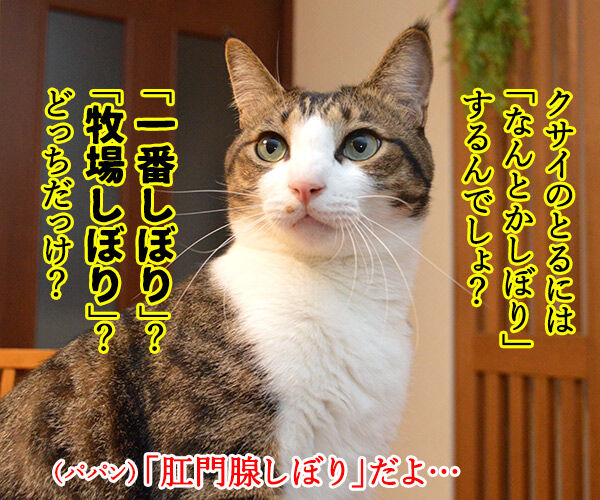 クサ汁 猫の写真で4コマ漫画 2コマ目ッ