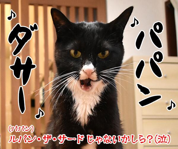 ルパンの曲といえばやっぱりこの曲よねッ 猫の写真で4コマ漫画 4コマ目ッ