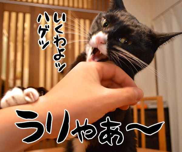 猫が噛む理由 猫の写真で4コマ漫画 2コマ目ッ