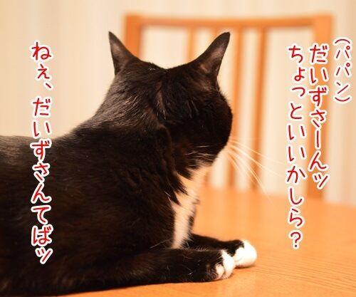 きょうは何の日? 猫の写真で4コマ漫画 3コマ目ッ