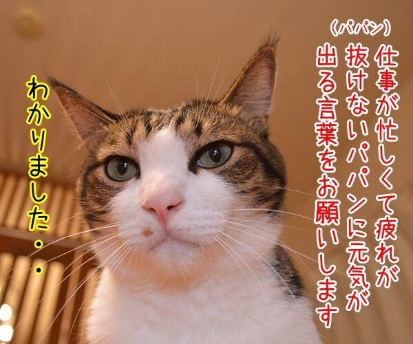 パパン、〇〇気でやりますッ 猫の写真で4コマ漫画 1コマ目ッ