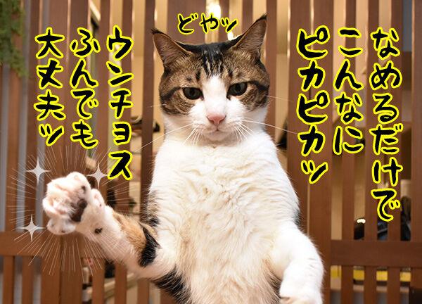10月15日は『世界手洗いの日』なんですってッ 猫の写真で4コマ漫画 5コマ目ッ