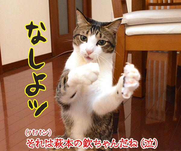 バンザーイッ 受験生のみんな 合格おめでとーッ 猫の写真で4コマ漫画 4コマ目ッ
