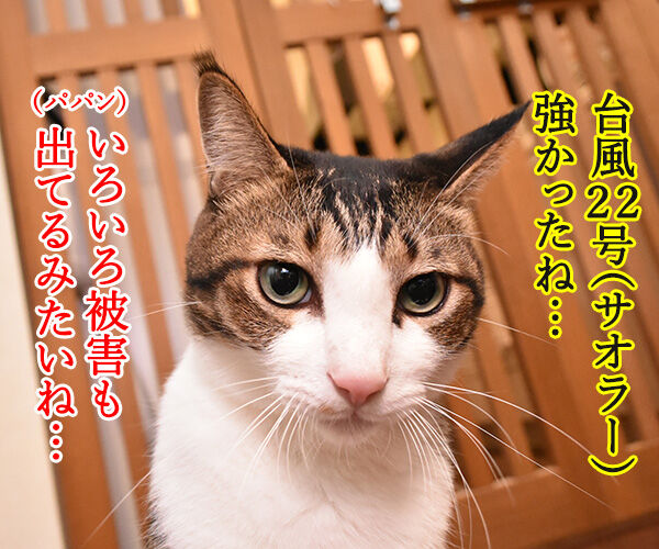 台風22号も強かったわね… 猫の写真で4コマ漫画 1コマ目ッ