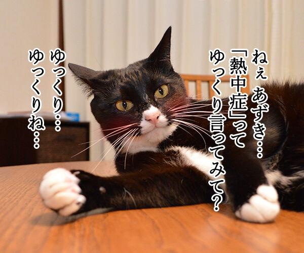 熱中症って言ってみてッ 猫の写真で4コマ漫画 1コマ目ッ
