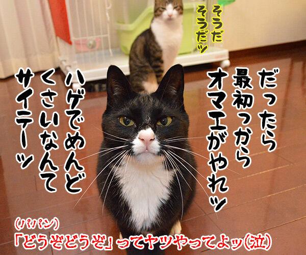 どうぞどうぞ 其の一 猫の写真で4コマ漫画 4コマ目ッ