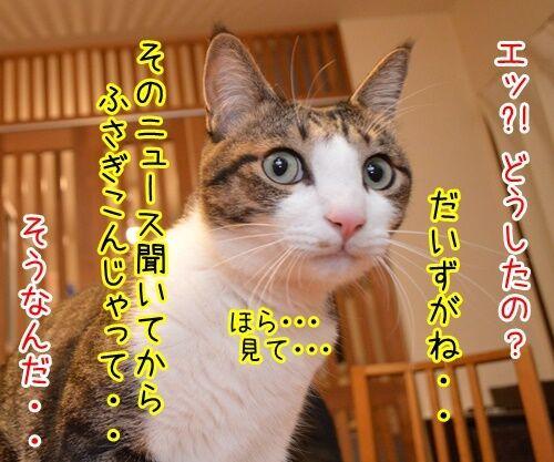 遠野なぎこさん 結婚おめでとう 猫の写真で4コマ漫画 2コマ目ッ