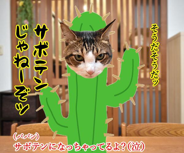 心配してくれている方へ 猫の写真で4コマ漫画 2コマ目ッ