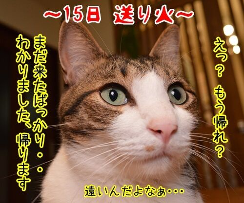 お盆 猫の写真で4コマ漫画 2コマ目ッ
