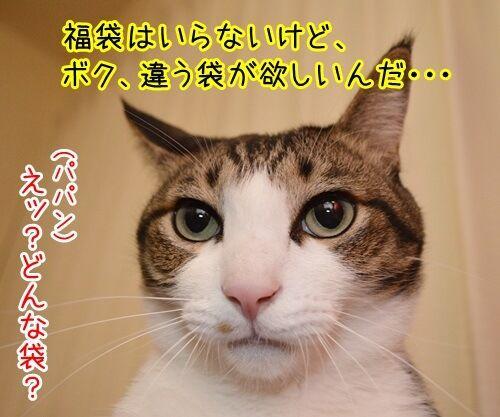 お正月といえば福袋 猫の写真で4コマ漫画 3コマ目ッ