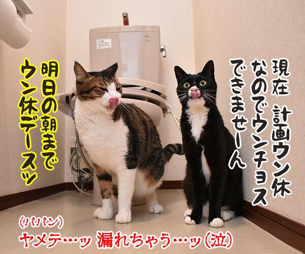 台風の影響で大規模な計画運休なのよッ 猫の写真で4コマ漫画 4コマ目ッ