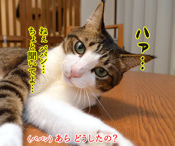 そんなにボヤいてると…… 猫の写真で4コマ漫画 1コマ目ッ