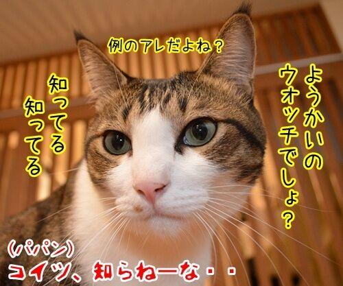 妖怪ウォッチ 猫の写真で4コマ漫画 2コマ目ッ