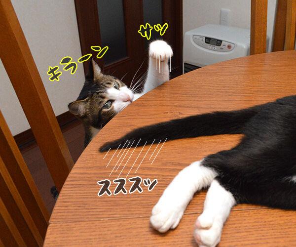 疲れた時は 猫の写真で4コマ漫画 1コマ目ッ