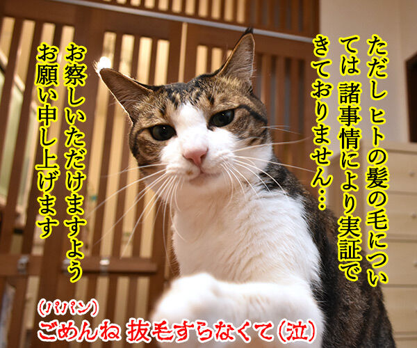 一緒に洗濯するだけで猫さんの毛を絡み取るスポンジがあるんですってッ 猫の写真で4コマ漫画 4コマ目ッ