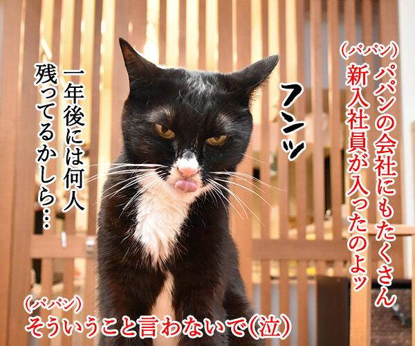 新入社員のみんなへひとことお願いしますッ 猫の写真で4コマ漫画 1コマ目ッ