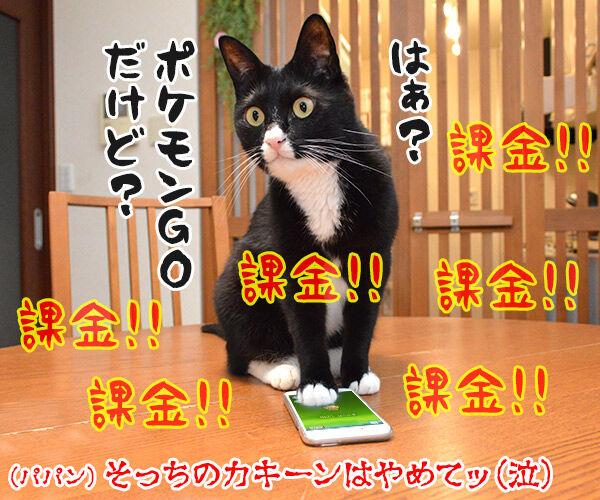 熱闘甲子園で熱くなるのよッ 猫の写真で4コマ漫画 4コマ目ッ