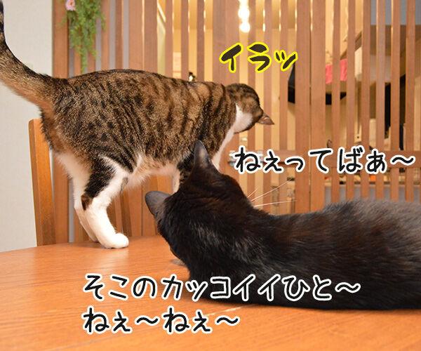 ねぇねぇ~ ねぇってばぁ~ 猫の写真で4コマ漫画 2コマ目ッ