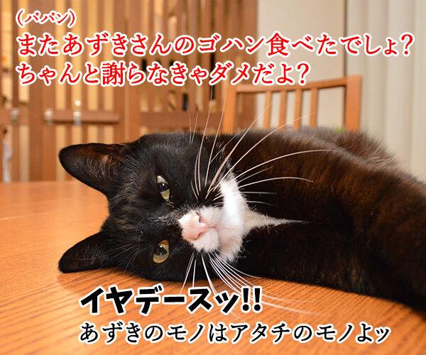 ちゃんと謝らなきゃダメッ 猫の写真で4コマ漫画 1コマ目ッ