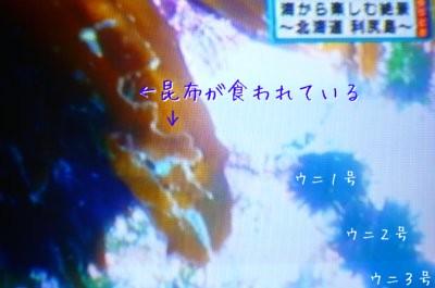 ウニ (3)