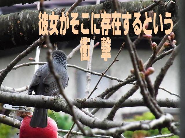 kanojyogasokoni180408image1