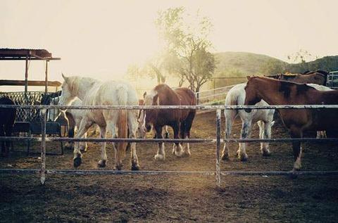 free-photo-horse-02