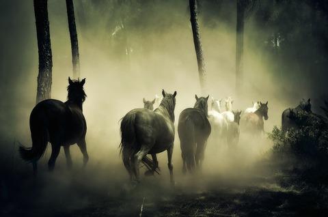 horses-1759214_960_720