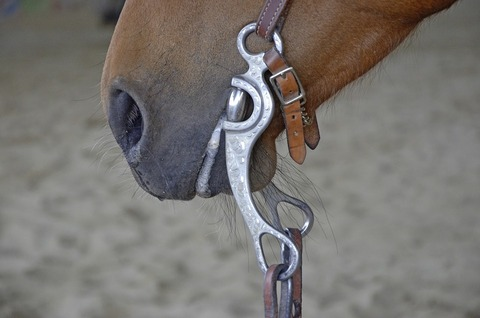 horse-1354909_960_720
