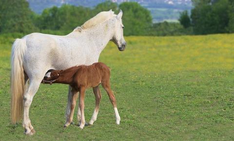 foal-5183837_960_720
