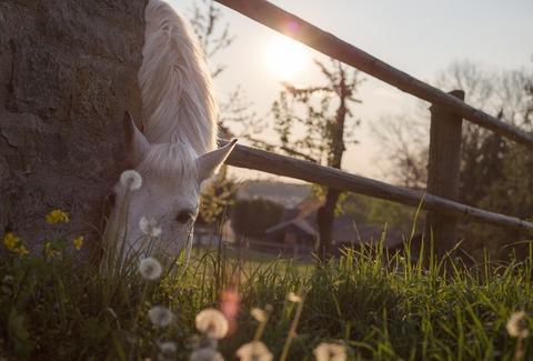 horse-331866_960_720