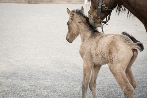 foal-5238587_960_720