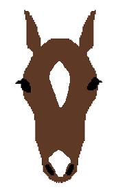 頭部の白斑(流星鼻白)