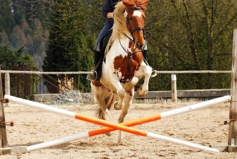 horse-1169871_960_720