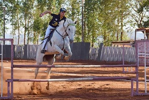 horse-4561007__340