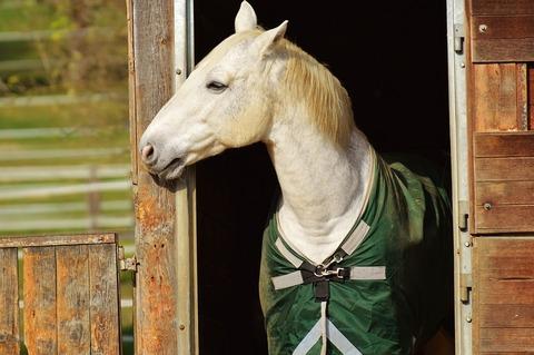 horse-1006558_960_720