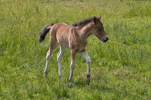 pony-farm-5240415__340