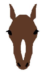 頭部の白斑(鼻梁白)