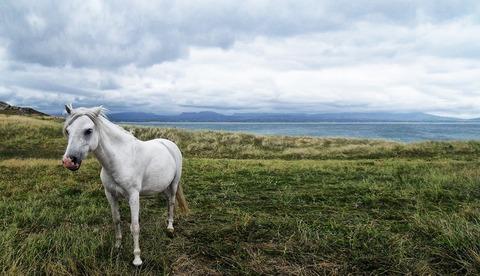 horse-58374_960_720