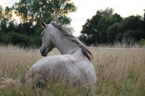 horse-905534_960_720